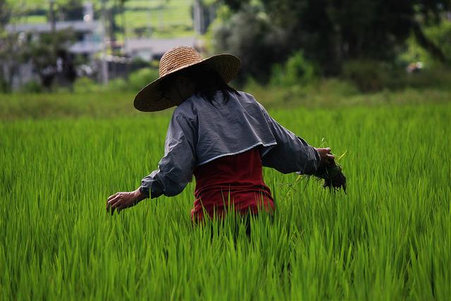 友善環境耕作的小農經濟最適合台灣。攝影:廖靜蕙
