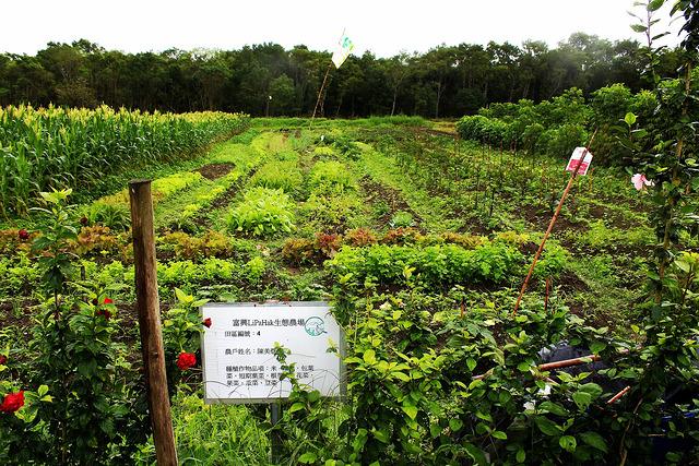 多樣化作物。圖片攝影:廖靜蕙。