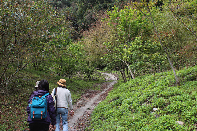 居民認領公有地造林。攝影:廖靜蕙