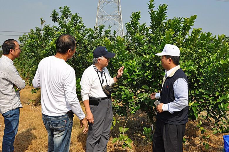 曾德賜在果園間協助農民診斷病害。